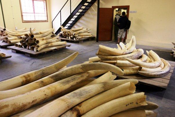 otdelka-doma-slonovaya-kost