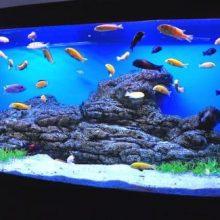 Выбор товаров для аквариумов в магазине Зоо Эра