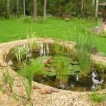 Лотос — украшение искусственного водоема