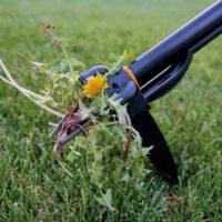 Этапы создания газона: очистка территории от сорняков