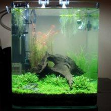 Нужно ли, чтоб фильтр в аквариуме работал постоянно