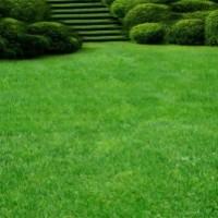 Секреты посева газона
